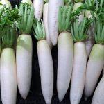 大根の保存の方法は?冷凍庫か冷蔵庫かで賞味期間は変わる?