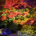 京都2017年紅葉の見頃の時期とライトアップの穴場は?