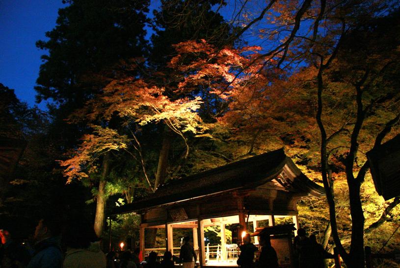 kyoto-momijimigoro-raitoappu