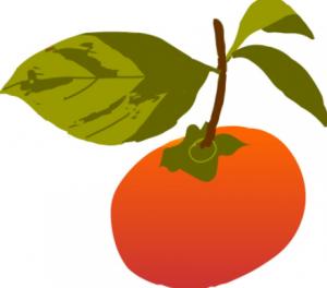 柿の効能や栄養成分まとめ