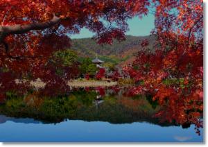 京都の紅葉は大覚寺も混雑?アクセスはバスより車がおすすめ?