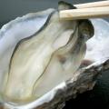 牡蠣の食中毒予防法!腐るとあたる?安全な鮮度の見分け方は?